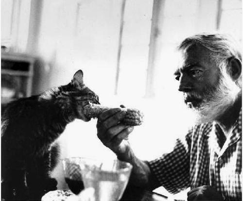Ernest Hemingway et l'un de ses chats.