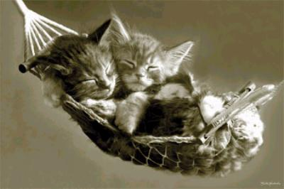 Hamac pour chatons Maine Coon