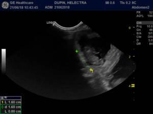 échographie gestation chatte 25 jours